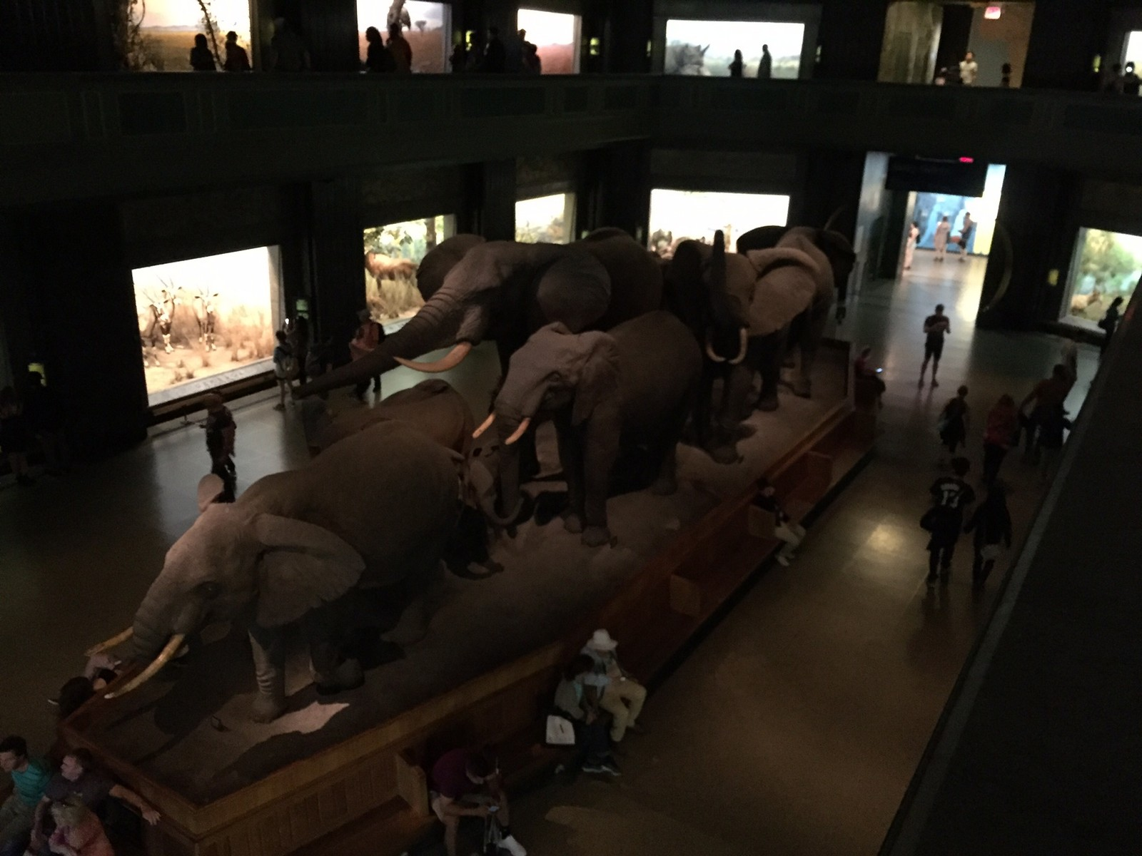 American Museum of Natural History Review